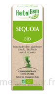 Herbalgem Séquoia Macérat bio 30ml