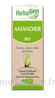 Herbalgem Amandier Macérat bio 30ml