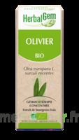 Herbalgem Olivier Macérat bio 30ml