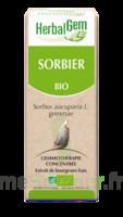 Herbalgem Sorbier Macérat bio 30ml