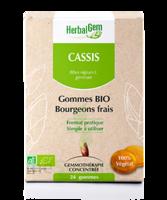 Herbalgem Gomme cassis bio B/24