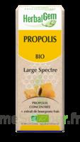 Herbalgem Propolis large spectre Solution buvable bio Fl cpte-gttes/15ml