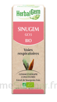 Herbalgem Sinugem Solution buvable bio Fl cpte-gttes/30ml